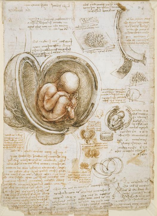 Study of foetus in womb