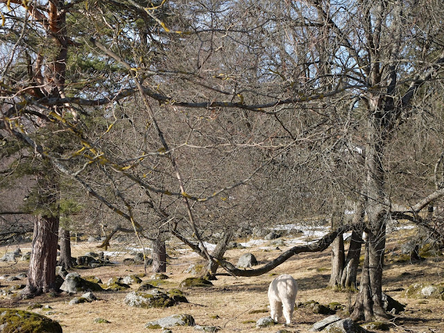 Metsänkylän navetta, Hämeenlinna, Tavastehus, Alpacka