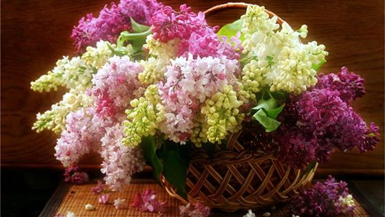 Beautiful Flowers in purple