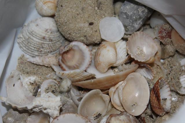 conchas playa DIY