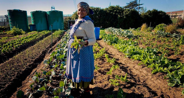 B&E | The Future of the Food System : South Africa as a Case Study