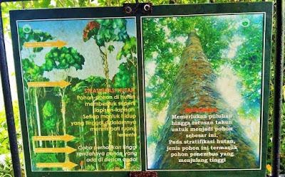Papan informasi berisi cerita dari hutan