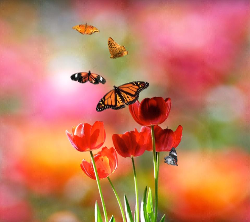 Free Colorful Flower Wallpaper Downloads: Free Mobile Wallpaper Download Free Wallpaper: Sony