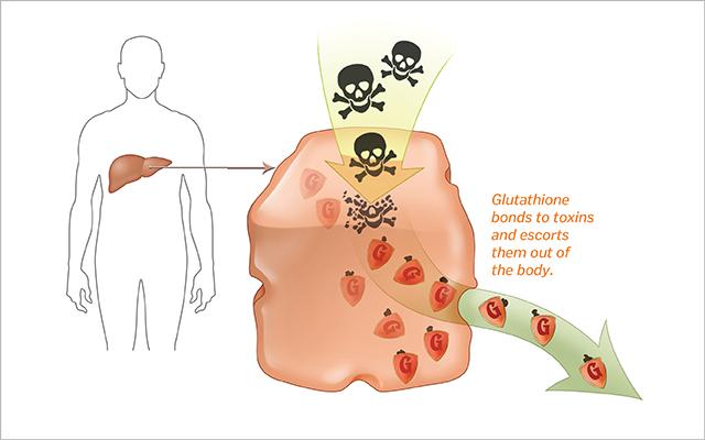 Chất dinh dưỡng do gan sản xuất – Giải pháp hàng đầu cho giải độc cơ thể