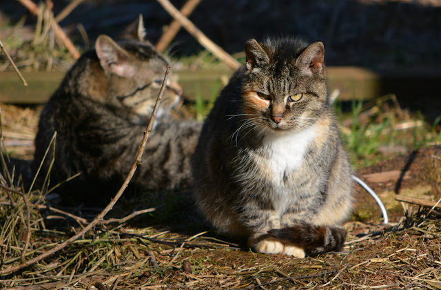 old calico feral cat sitting with a friend
