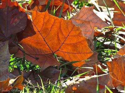 spiritual awakening, falling leaves, dying ego