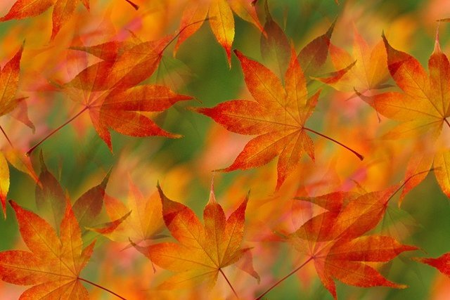 Fall Leaves Wallpaper Powerpoint Background Thanksgiving Cards