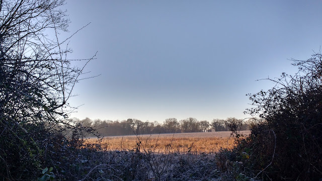 midwinter frost in Norfolk countryside