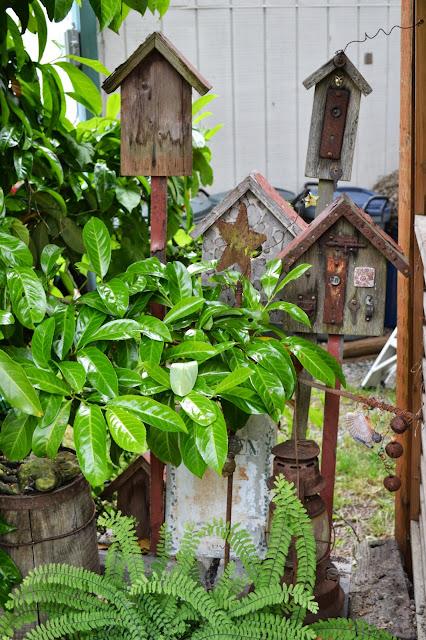The Outlaw Gardener: Vashon Island Northwest Perennial