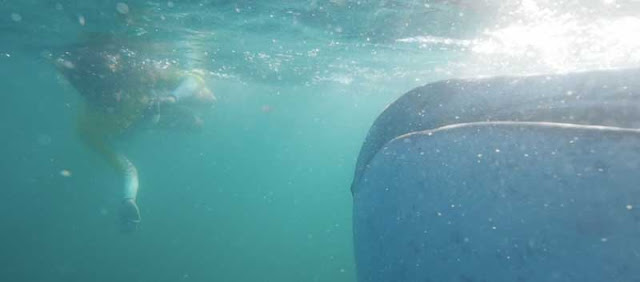 lara alvarez nadando con tiburones en Planeta Calleja
