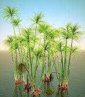 Su içindeki papirüs bitkileri