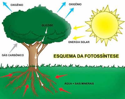 Então o que é a fotossíntese
