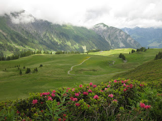 AlpRundweg Leiterli trail through meadow, with mountain roses and nearby peaks, Lenk, Switzerland