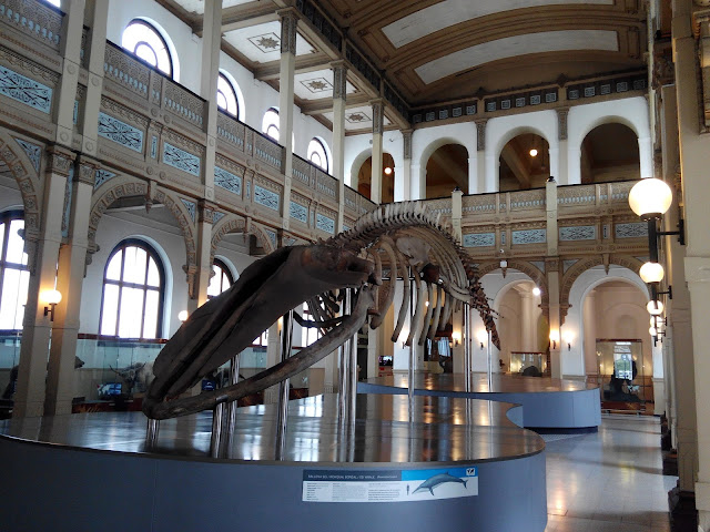 Hall Museo de Historía Natural, Santiago Chile
