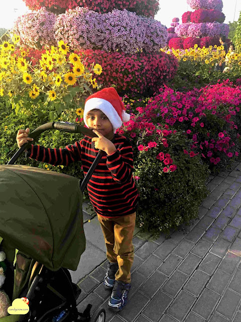 Miracle garden Complete Guide to Visit Dubai
