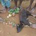 Hotuna: Matasa sun gudanar da tsafi domin kada albarushi ya ratsa jikinsu
