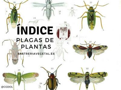 Lista de plagas de plantas perjudiciales para poder identificar cuando su poblaciones aumenta excesivamente