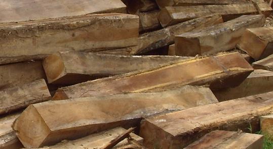 jenis-jenis kayu jati yang berkualitas diindonesia