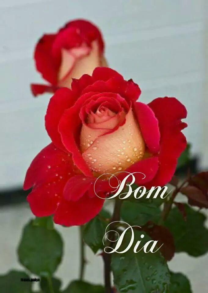 Titlefrases De Bom Dia Linda Rosa Vermelha Frases De Bom Dia