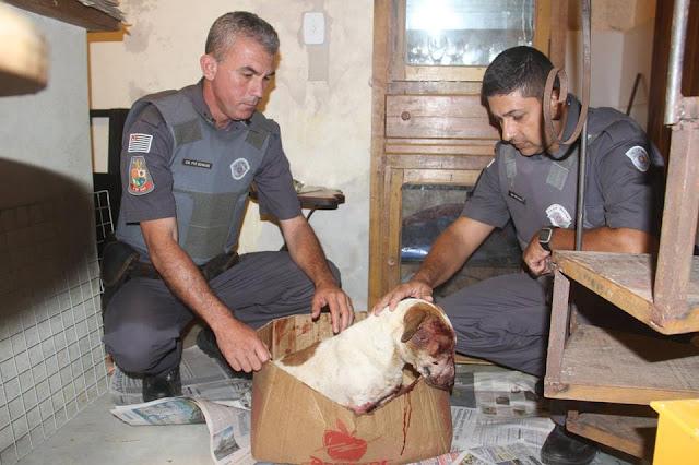 POLÍCIA MILITAR PRENDE AUTOR DE CRUELDADE CONTRA ANIMAL EM ELDORADO