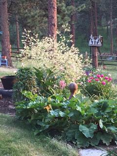 Perennials with Presence by Cherie Luke, Master Gardener