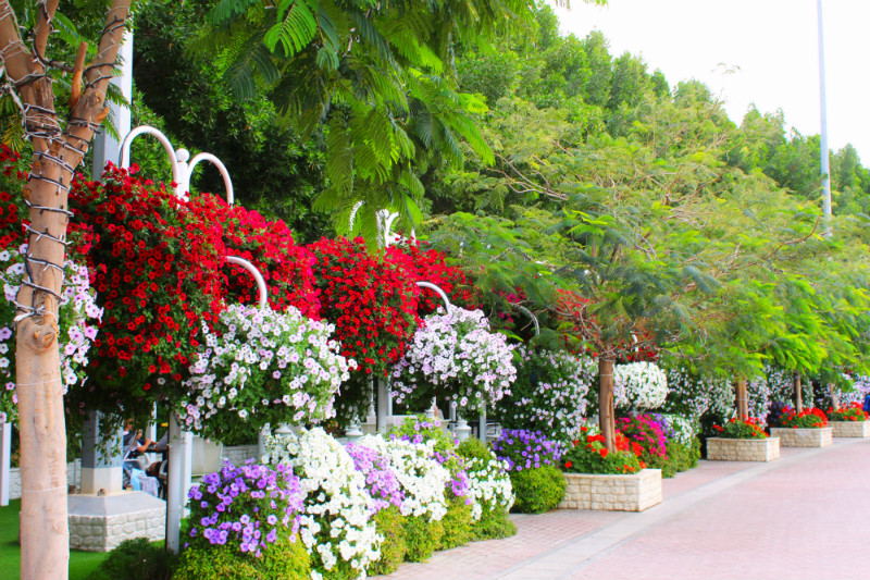 Floral Display in Dubai Miracle Garden