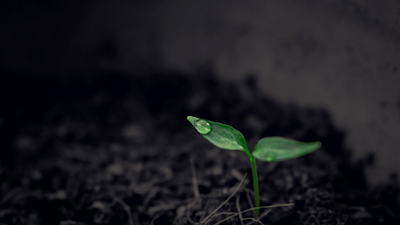 sprout in soil