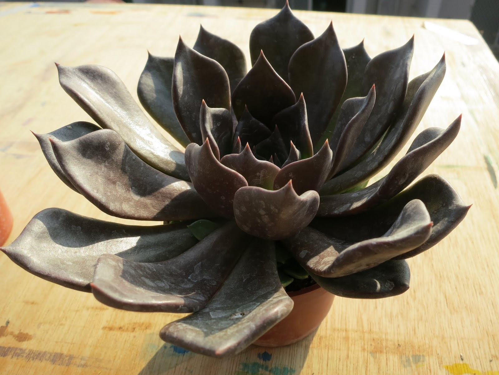 Succulents-lover 阿多肉: 田尾多肉戰利品