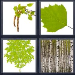 4 fotos 1 palabra hojas verdes troncos arboles ramas for Significado de la palabra arboles