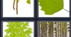 4 Fotos 1 Palabra Hojas Verdes Troncos Arboles Ramas Soluciones