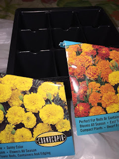 A pack of nine segment plug pot seed trays and two packs of French Marigold Seeds. One Pack of seeds shows bright Lemon Yellow Flowers the othe mixed Orange, Yellow and Red Flowers.