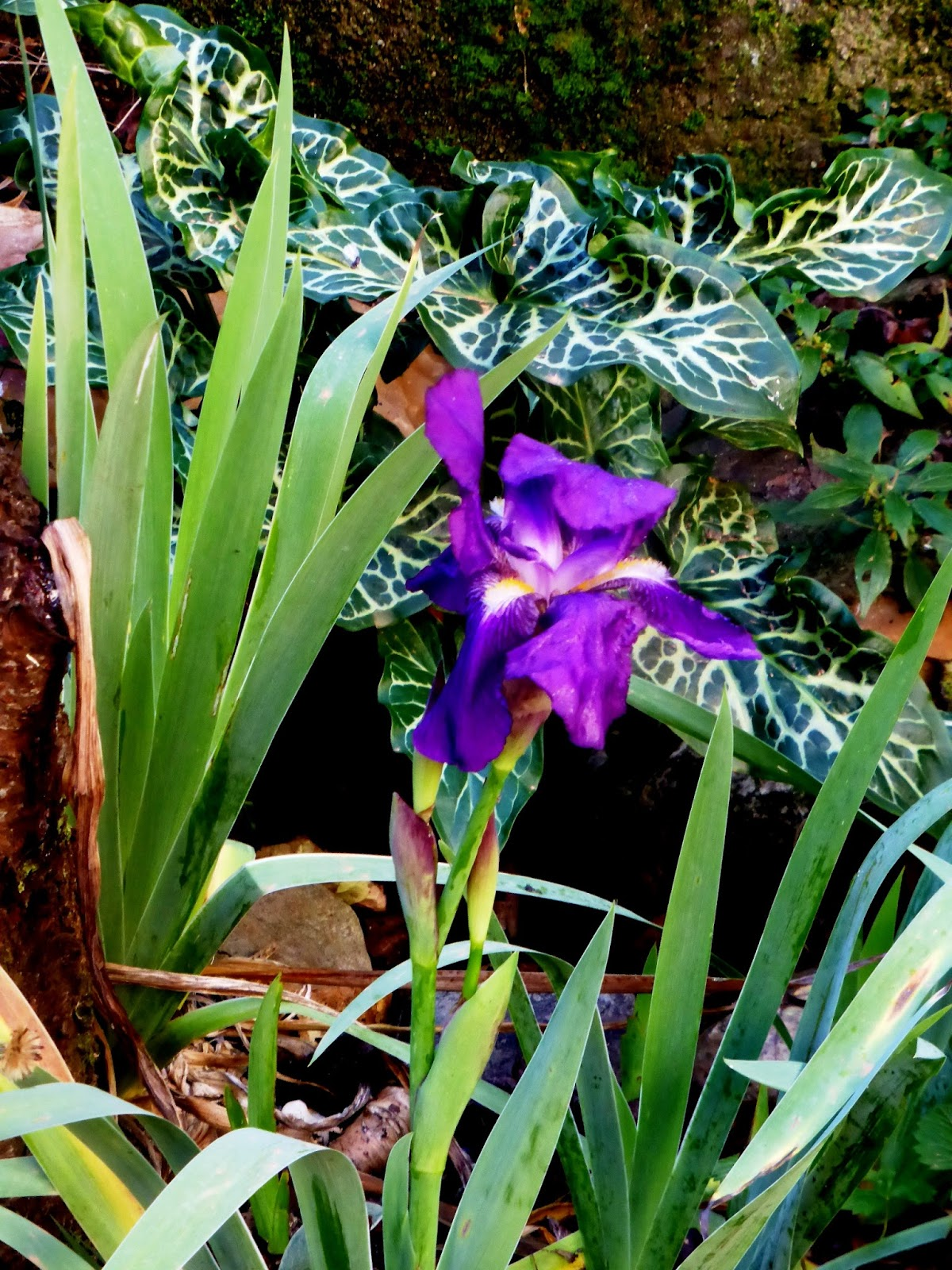 Flowers Online 2018 What Does The Iris Flower Mean Flowers Online