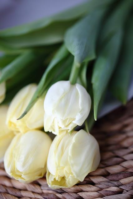 #tulppaanitorstai, tulips