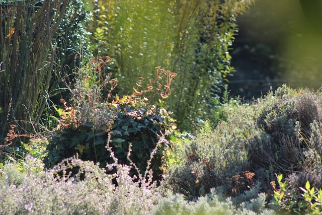 gradina flori toamna, amenajare gradina, design gradina, peisagistica, firma amenajari exterioare bucuresti ilfov, amenajare curte cu plante, culori toamna
