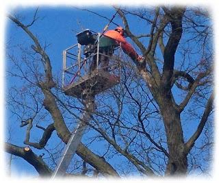 Baumschnitt in Besandten