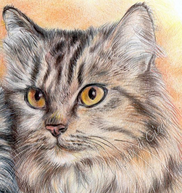 I dipinti di giada gatta con gattino disegno a matite - Gatto disegno modello di gatto ...