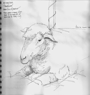 как нарисовать овцу
