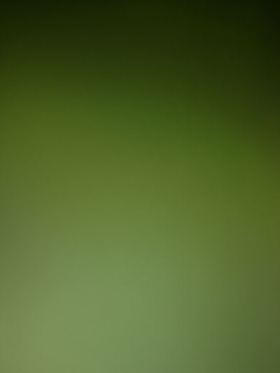 picture of leaf taken with 15x lens adapter for smart phone