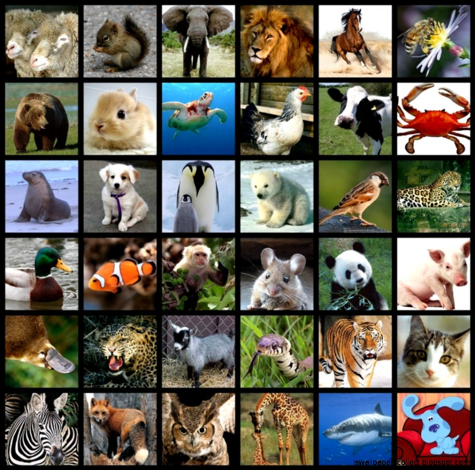 All Types Of Animals | Wallpapers Collection