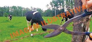 Iretama: PM registra furto de gado na Água Fria