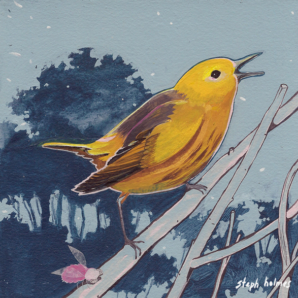 Yellow Warbler bird painting Steph Holmes