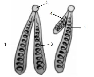 Soal struktur kromosom