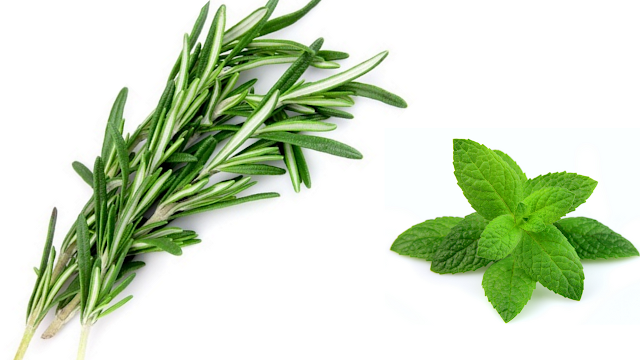 rosemary and mint to deter cats