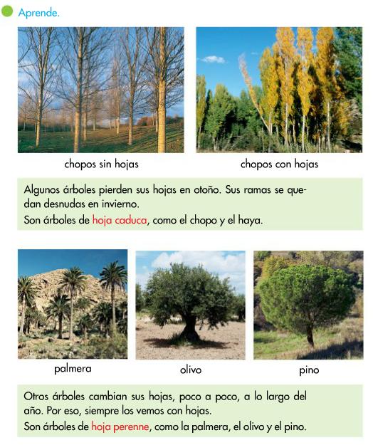 http://www.primerodecarlos.com/SEGUNDO_PRIMARIA/enero/tema1/actividades/CONO/caduca_perenne/visor.swf