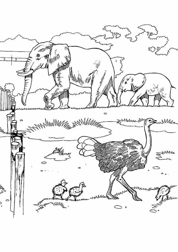 Odev Vakti Boyama Etkinlikleri Hayvanat Bahcesi 1