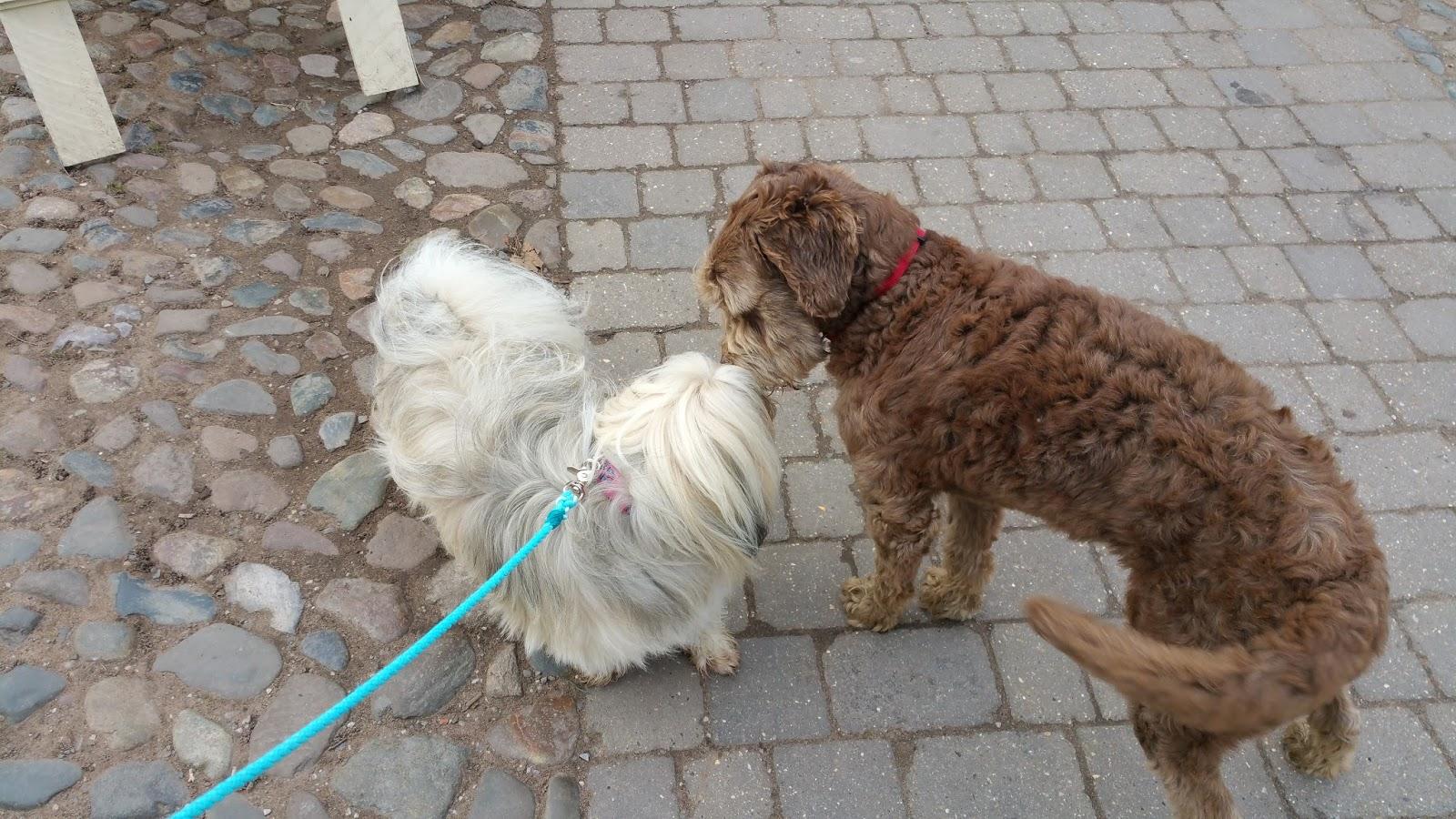 Dog Walks Near Nantwich