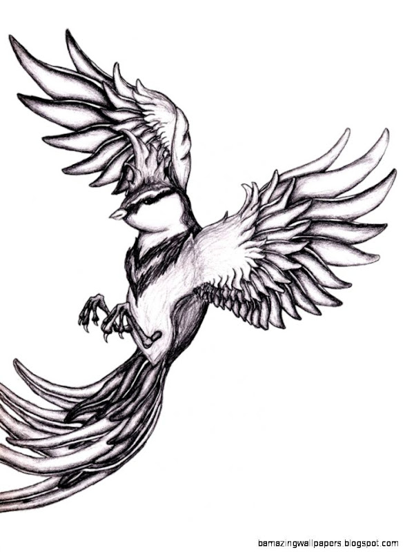Flying Bird Drawing Tumblr | Amazing Wallpapers