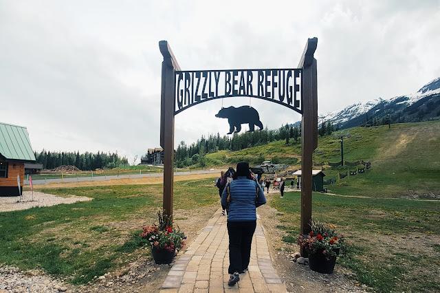 Grizzly Bear Refuge Kicking Horse Mountain Resort, British Columbia, Canada