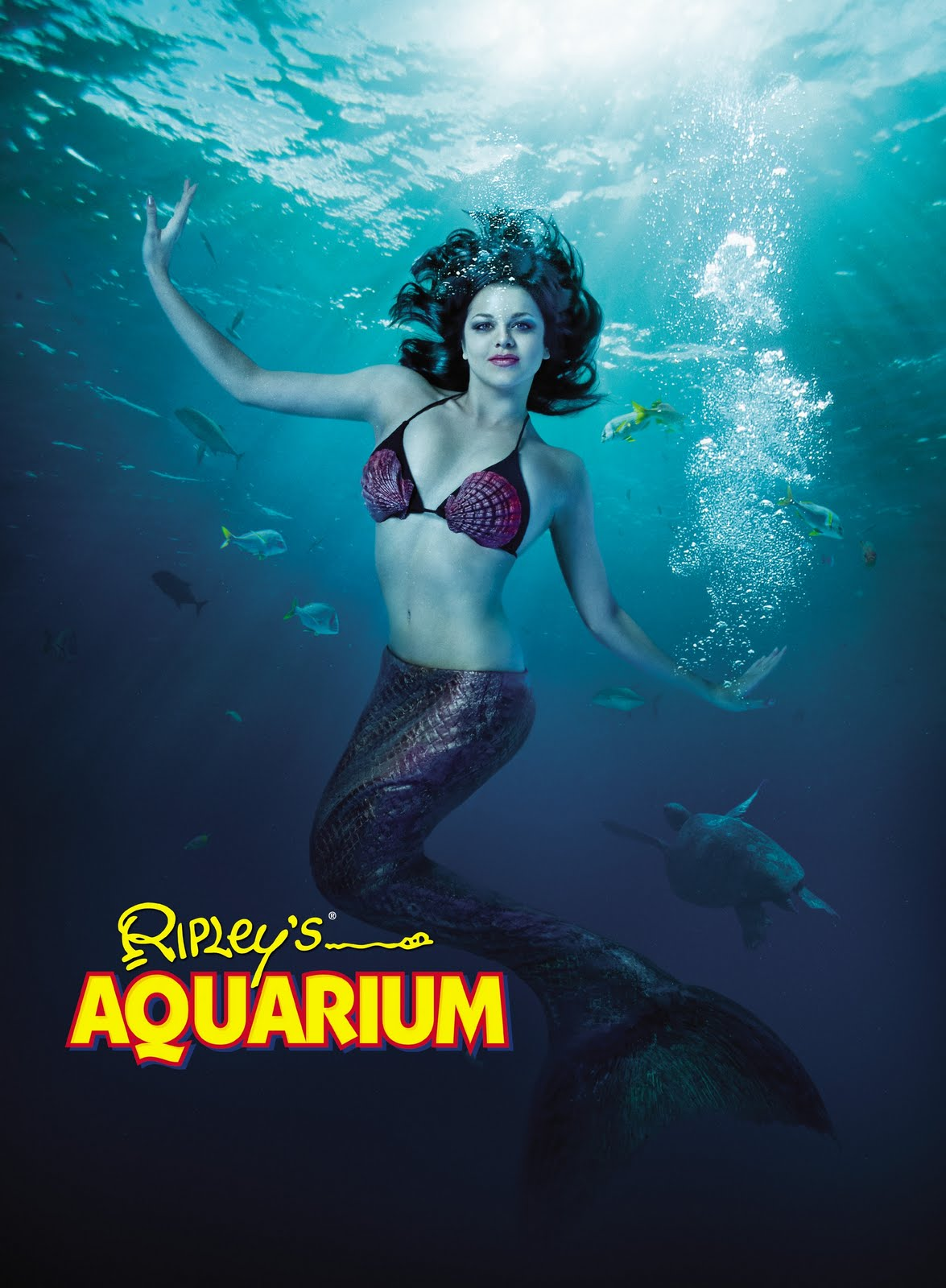 Ripley S Aquarium In Myrtle Beach Is Presenting Some Of The Most Magical Creatures World This Summer Mermaids Mermaid Shows Are