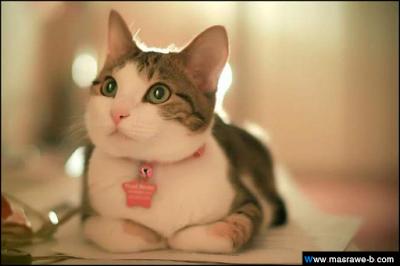 صور صور قطط كيوت 2020 خلفيات قطط جميلة جدا cats39.png